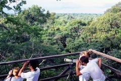 Observation de la faune à la réserve de Rio Napo, environs de Coca. (© Author's Image)