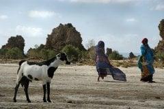 Nomades afar sur le lac Abbé. (© Eyerusalem ABERA)