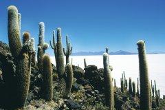 Vue du salar d'Uyuni depuis l'île Pescado. (© Sylvie LIGON)