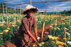 Femme cultivant des fleurs. (© Author's Image)