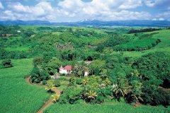 Plantation de canne à sucre à Sainte-Suzanne. (© Atamu RAHI - Iconotec)