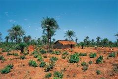 Paysage rural de Casamance. (© S.Nicolas - Iconotec)