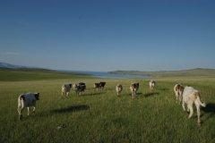 Paysage de steppe sur l'île d'Olkhon (© Stéphan SZEREMETA)