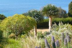Jardin des Canaries, fougères arborescentes, Domaine du Rayol. (© Domaine du Rayol)