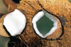 Lait de coco à déguster sans modération! (© Sir Pengallan - Iconotec)