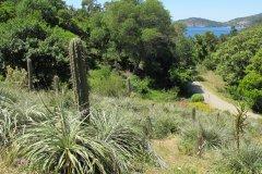 Jardin du Chili, Domaine du Rayol. (© Domaine du Rayol)