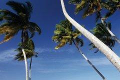 Zanzibar (© iStockphoto.com/tropicalpixsingapore)