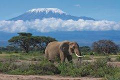 Éléphant dans la région du Kilimandjaro. (© graemes - iStockphoto.com)