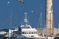 Chalutiers rentrant au port. (© Gérard Labriet)
