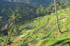 Rizière près d'Ubud. (© Léa Smith - Iconotec)