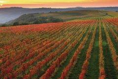 Vignes aux couleurs automnales. (© Tourist Organization Koper / Ubald Trnkoczy)