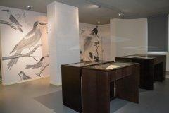 Salle des Oiseaux de Buffon. (© Ville de Lunel - Service Communication)