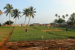 Agriculture aux abords de Grand-Popo. (© Cora Unk Photo - Shutterstock.com)