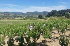 Balades et dégustations dans les vignes. (© Laurent BOSCHERO)