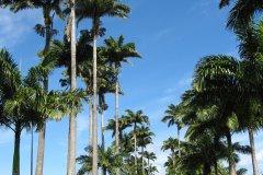 Les allées Dumanoir, célèbre pour ses rangées de palmiers. (© Vouvraysan - Fotolia)