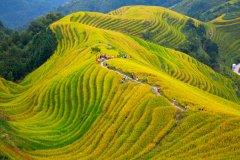 Les rizières de Longsheng. (© Fedor Selivanov - Shutterstock.com)