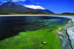 Vue de la Lagune Miscanti (© Sylvie LIGON)