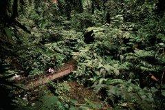 Forêt tropicale dans le parc national de la Guadeloupe. (© Author's Image)