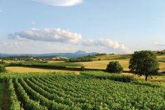Vignes auvergnates (© BERNARD 63 - FOTOLIA)