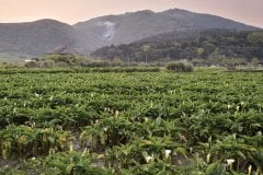 Parc National de Yangmingshan. (© VII-photoa - iStockphoto)