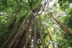 Vegetation Tropicale (© JC DUSANTER)