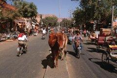 Dans les rues de Jaïpur. (© Author's Image)