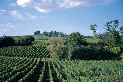 Le vignoble de Fronsac. (© BP Lamarque)