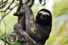 Parc National de Cahuita. (© Richard Taylor)