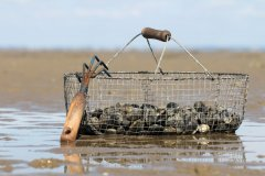 Pêche à pied. (© Thomas Pajot - stock.adobe.com)