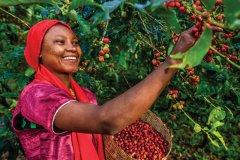L'Ethiopie est le septième producteur mondial de café. (© Bartosz Hadyniak)