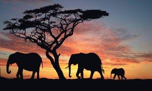 Photo Kenya