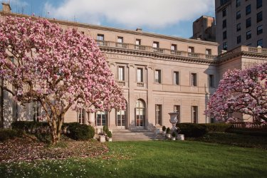 Magnolias in Bloom April 22, 2015 (© THE FRICK COLLECTION)