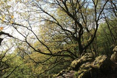 Forêt de Multonne. (© Parc naturel régional Normandie-Maine)