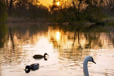 Vondelpark au coucher du soleil. (© Dennis van de Water - Shutterstock.com)
