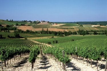 Vignoble de Gaillac (© AM stock nature)