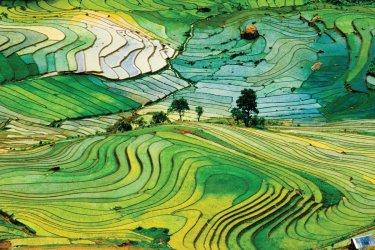 Rizières en terrasse du Vietnam.