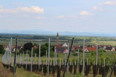 Vue sur le village de Mittelwihr dans le vignoble de Bennwihr (© Marine PREISS)