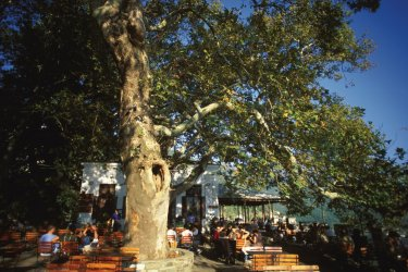 Terrasse ombragée de Makrinitsa. (© Author's Image)