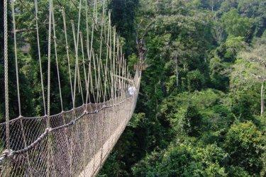 Parcours du Canopy au Kakum National Park. (© bytestrolch - iStockphoto.com)