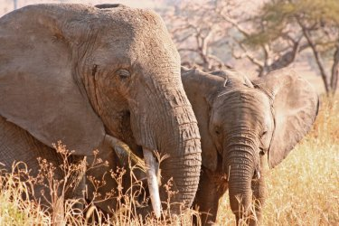 Safari and beaches in the South and Zanzibar parks