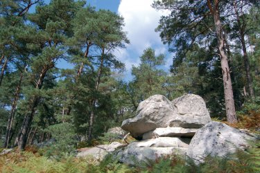 Dans la forêt de Fontainebleau (© Anne GEOFFROY - Fotolia)