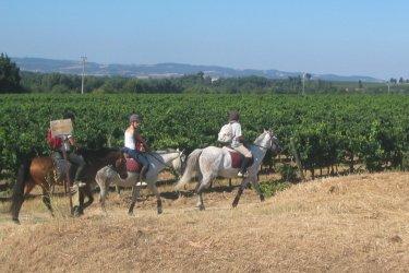 Château Auzias (balade à cheval dans les vignes) (© Dominique Auzias)