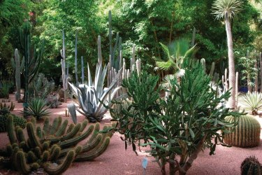 Le jardin Majorelle. (© Sébastien CAILLEUX)