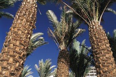 Quelques palmiers égayent la station balnéaire d'Eilat. (© Tom Pepeira - Iconotec)