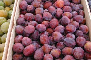Les prunes d'Agen. (© CDT47)