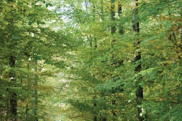 La forêt de Haye (© Stéphane Belin)