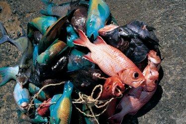 Pêche multicolore (© Itzak Newmann - Iconotec)