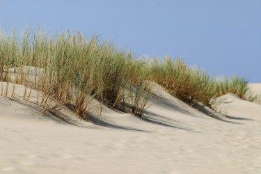 Dunes de La Coubre (© Christian MUSAT - Fotolia)