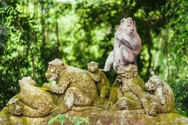 Forêt sacrée des singes. (© Nvelichko / Shutterstock.com)