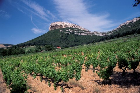 Vignoble de Provence. (© AM stock nature)